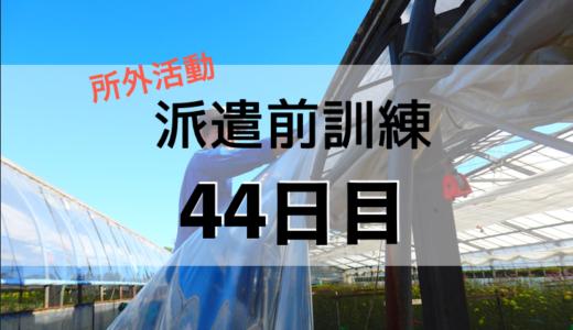 44日目(5月19日)
