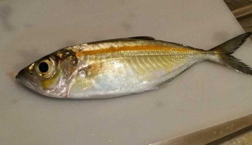 お魚ハンバーグ🐟