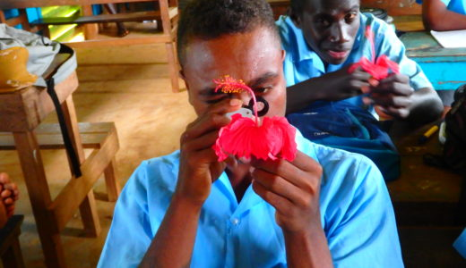 中学一年生「花のつくり」観察実験で使った植物は南の島っぽいアレ!